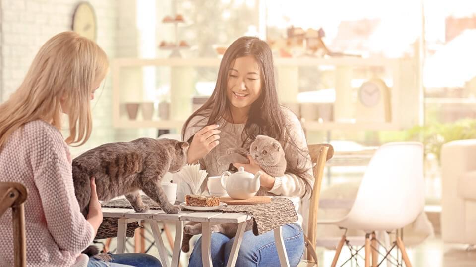 Young women having a coffee